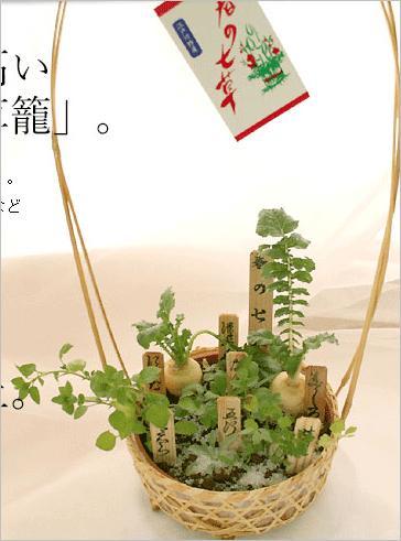 産地直送 春の七草なら寄せ植えのこちら!